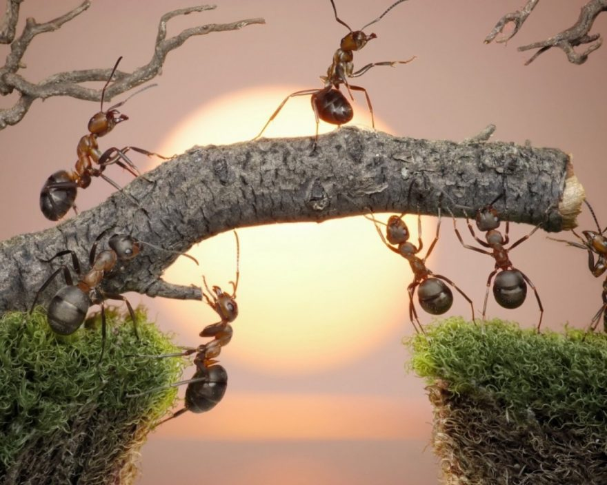 funny_ant_building_a_bridge__resized_1920x1080